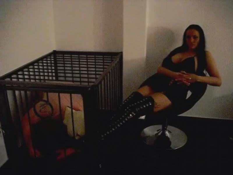 Stiefellecker im käfig